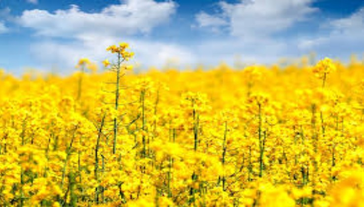 Make nails voguish with this yellow flower design mightylinksfo